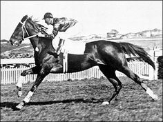 """Phar Lap - New Zealand racehorse and Aussie icon during 1920s and early 1930s. He measured staggering 17.1 hands high while his heart was 1.5 times larger than average horse heart. Phar Lap (Thai for """"Lightning"""") had 37 wins in 51 races, and set 8 track records before his mysterious death in 1932. Many speculated that U.S. gangsters fearing big losses poisoned the horse. 70 yrs later forensics proved he ingested large dose of arsenic just before death, though a source wasn't found."""