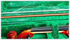 Bow bugs that attack #violin, #viola and #cello #bows are simple to treat and prevent.