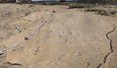 Descubrimiento de huellas fósiles desafían las teorías de la evolución humana