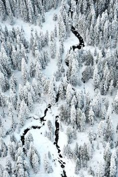 winter forest-aerial view