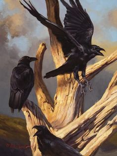 "Crows Ravens: ""Stark Mad,"" by Dustin Van Wechel. Oil on linen, 16 x Crow Art, Raven Art, Bird Art, Quoth The Raven, Jackdaw, Tinta China, Crows Ravens, Foto Art, Wildlife Art"