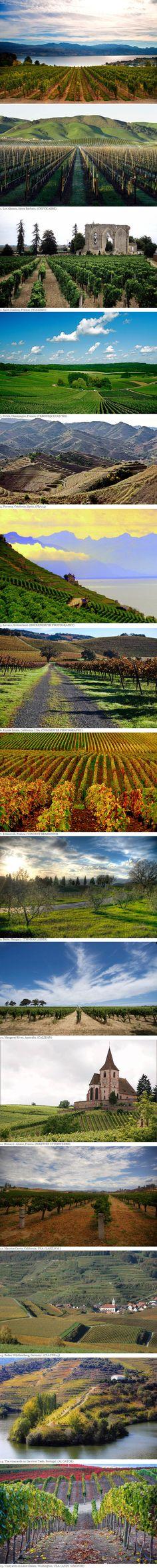 Vineyards of the World I