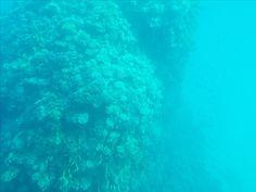 Ещё немного позитива, друзья! Видели коралловые рифы сверху и издалека, а теперь можете рассмотреть их из-под воды и вблизи🌊  P.S. батискаф свою работу выполнил на отлично!) 👍 #nofilter #кораллы #дайвинг#вморе#подводой#синееморе #глубокоесинееморе#кораловыерифы #риф