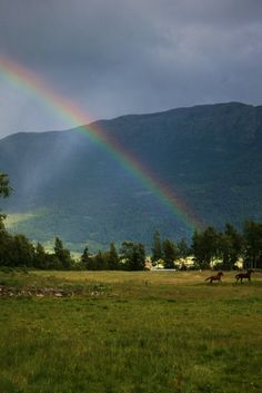 Forget gold at the end of the rainbow all the riches you need = Horses