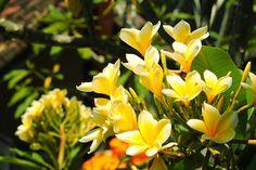 3/3(金)バリ島ウブドのお天気は晴れ。室内温度30.0℃、湿度66%。モクモクの雲が浮かんでいます。今日も暑い1日となりました!