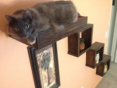 These beautiful floating cat shelves are made from reclaimed wood. These floating cat shelves can be arranged in any which way you desire! Stagger them to make a cat stair, place them around to make convenient perches for your kitty, line them up to make a larger cat walkway, the possibilities are only as limited as your wall space! These floating cat cubes and cat bed serve a dual purpose, they allow for your kitty to perch up high to build confidence or to just catch a few winks of sleep…