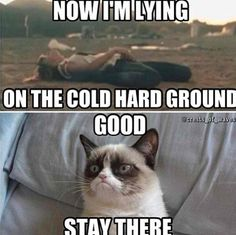 Funny grumpy cat funny grumpy cat quotes grumpy kitty For the best memes an – Fu… Grumpy Cat Quotes, Funny Grumpy Cat Memes, Cat Jokes, Animal Jokes, Funny Animal Memes, Cute Funny Animals, Funny Animal Pictures, Funny Cute, Funny Jokes