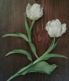 Tulips.nl