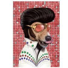 「pets rock」の画像検索結果