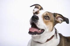 How to Make Dog Ice Cream Similar to Frosty Paws thumbnail Homemade Flea Killer, Homemade Dog, Homemade Recipe, Diy Recipe, Rottweiler, Dog Ear Mites, No Bake Dog Treats, Doggie Treats, Cat Treats