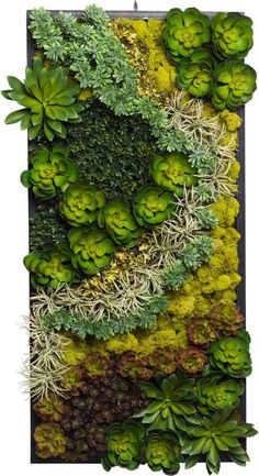 Succulent Wood Frame Right Side - LU-1062