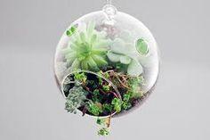 Small hanging succulent terrarium