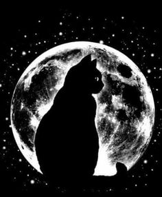 Cat Moon Silhouette Canvas Print by madlove Moon Silhouette, Cat Silhouette Tattoos, Black Cat Silhouette, Black Paper Drawing, Moon Painting, Cat Wallpaper, Cat Tattoo, Moon Art, Cat Drawing