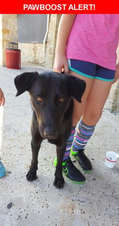Is this your lost pet? Found in Cedar Park, TX 78613. Please spread the word so we can find the owner!  Description: FOUND DOG - on 11/12/16 around noon at Soccer Zone Lakeline. Black Lab mix, male, intact, no collar, no microchip, black harness, flea collar, smelled recently bathed.   Nearest Address: 920 Old Mill Rd, Cedar Park, TX, United States