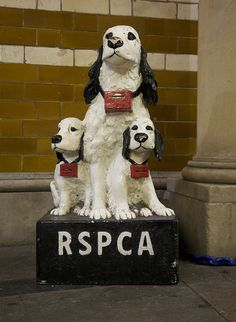 RSPCA dog charity box in the Guildhall Market My Childhood Memories, Family Memories, Early Childhood, I Remember When, My Memory, The Good Old Days, Back In The Day, Charity, The Past