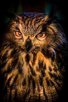 OWL by Chantal Cecchetti on Beautiful Moon, Beautiful Birds, Nocturnal Birds, Burrowing Owl, Power Animal, Little Birdie, Wise Owl, Owl Art, Exotic Birds
