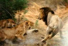 Animals Wallpapers: lions fighting