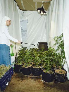Estas monjas cultivan marihuana y venden sus productos medicinales por internet