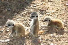 Some new recruits perhaps? - These little guys are from Taronga Western Plains Zoo