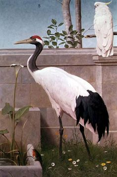 "Henry Stacy Marks - 1829 1898 - Manchurian Crane, Cockatoo and Robin - Odd but beautiful bird compositions from the Victorian / British Arts & Crafts period. - Apparantly from a series of 12 painted panels for an 1890's ""Ante-Drawing room"". Eaton Hall, Cheshire"