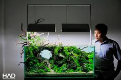 Simon's Aquascape Blog . Pin #aquaPoolkoh seriously different...those pieces of driftwood are coming out of the aquarium all around...look closely!