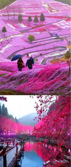 Beautiful hillside fields in Hokkaido, Japan.