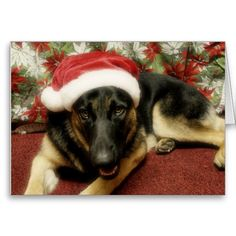 20 best german shepherd christmas cards images on pinterest german shepherd christmas greeting cards m4hsunfo