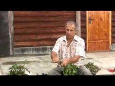 Как связать хороший веник для бани? - YouTube