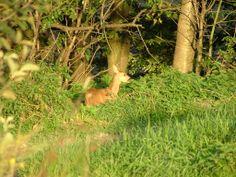 treba sa pozerať okolo seba :) mladá srna
