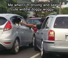 Morning Funny Picture Dump 34 Pics #FunnyThings #dogsfunnytext