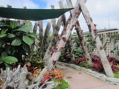 Auckland Botanic Gardens, Manurewa, Auckland, New Zealand by Big..Al, via Flickr