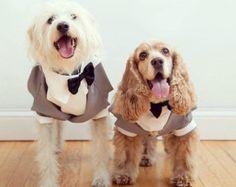 Ropa para perros vestido de perro. Vestido de gato con por CUTIEDOG