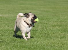 Pugsley loved to play ball