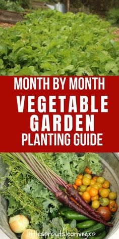 Do you struggle wondering when to plant what vegetables in your garden? Check out this month by month vegetable garden planting guide.