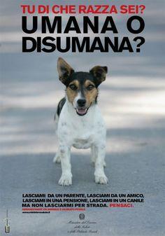 Come comportarsi se si trova un animale ferito o abbandonato?