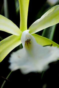 Régen jártam már a debreceni botanikuskertben, így hétvégén volt mit bepótolnom. Néhány évvel ezelőtti emlékeim egy kellemes nyári naphoz kötődnek, amikor minden virágos, színes és derűs volt. Ezúttal egy visszafogottabb, nyugodtam oldalával találkoztam, amikor is az embernek van ideje gondolkodni, elmélkedni és élvezni a megnyugvást. A természetét és a sajátjáét. Mindannyian készülünk a megújulásra, a színekre, a tavaszra. Ezt érezzük és látjuk is…
