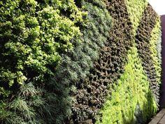 Martha Sophia, muro verde por Francisco Sosa. México