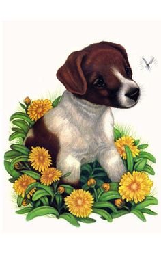 Brown and White Puppy (dog) by Robin James