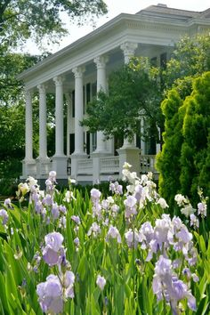 Southern plantation and irises for days. All things southern Southern Plantation Homes, Southern Mansions, Southern Plantations, Southern Homes, Plantation Houses, Magnolia Plantation, Southern Comfort, Southern Charm, Southern Belle