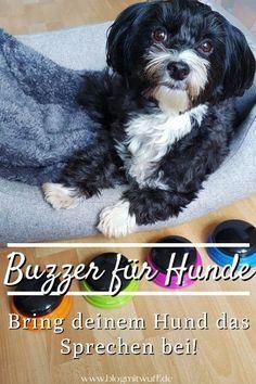 Pin Sprachbuzzer für Hunde 02 Tricks, Blog, Animals, Christmas Presents For Dogs, Birthday Cakes For Dogs, Dog Snacks, Toller Dog, Dog Care, Animales