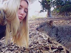 Couples be like .. but I just want a kiss from a Quokka #quokkaselfie #quokka #rottnestisland #australiasanimalsarethebest by laurelia3 http://ift.tt/1L5GqLp
