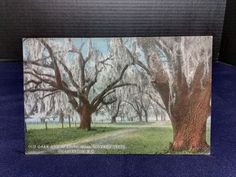 Postcard Old oaks and Spanish moss covered trees, Charleston, SC. 1915