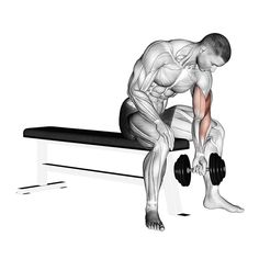 biceps workout Create a sculpted back and build your biceps with this amazing workout. This article is going to take you through one of many beneficial back and biceps workouts. This mu Back And Bicep Workout, Forearm Workout, Gym Workout Tips, Back And Biceps, Dumbbell Workout, Fitness Workouts, Workout Videos, Fun Workouts, Dumbbell Exercises