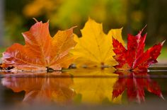 Autumn Leaves by Eigerdreams  on 500px