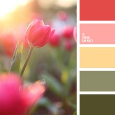 amarillo naranja, color bermellón, color rojo sonrosado, color rosado coral, color verde camuflaje, color verde militar, color verde oliva oscuro, coral, rosado suave, tonos pastel cálidos, tonos rosados, tonos verdes, verde oliva apagado.