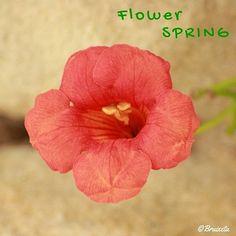 #flors #plantes #Catalunya #paíspetit #naturalesa  #flora #Abril2016 #primavera #fotografia #flowers #plants  #Catalonia  #nature #spring #April #instagood #macro #canon #photograph