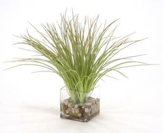 Waterlook® Frosted Grass in Clear Square Glass Vase with Rocks and Water SKU 15769B