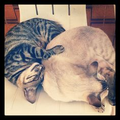Como gatos panza arriba. mrguasch's photo on Instagram