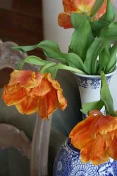 Beautiful fringed (?), striated (?) tulips would look great planted with blue pansies - French-Kissed.com