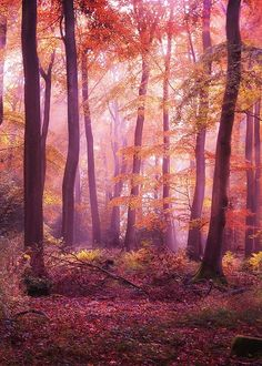 Misty Dawn, The Enchanted Wood photo via danielle Statues, Foto Nature, Avatar, Misty Dawn, October Country, Enchanted Wood, Pink Forest, Down South, Perfect World